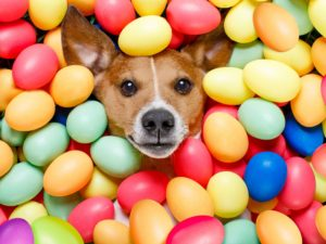 Dog surrounded by colourful eggs